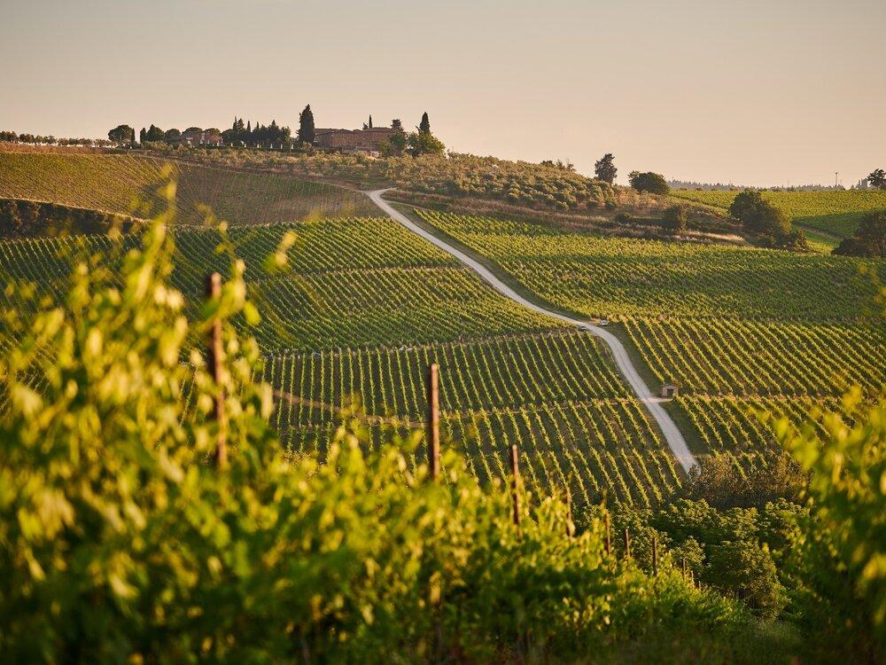 Wine-Fields-Salute-Canned-Wine